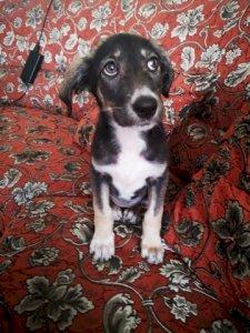 Кученцето Роузи търси нов дом